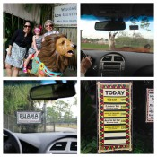 Globetrotting Mommy - Spotlight on Florida at Lion Country Safari